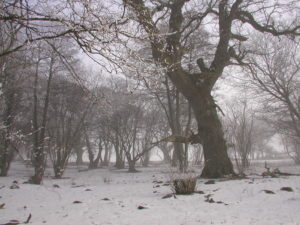 Naturreservatet Böda prästgård